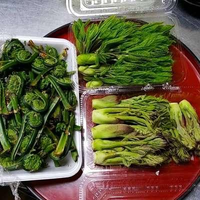 信州の遅い春を感じさせる山菜を天ぷらで。